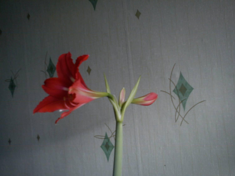 Цветок узнать название по фото