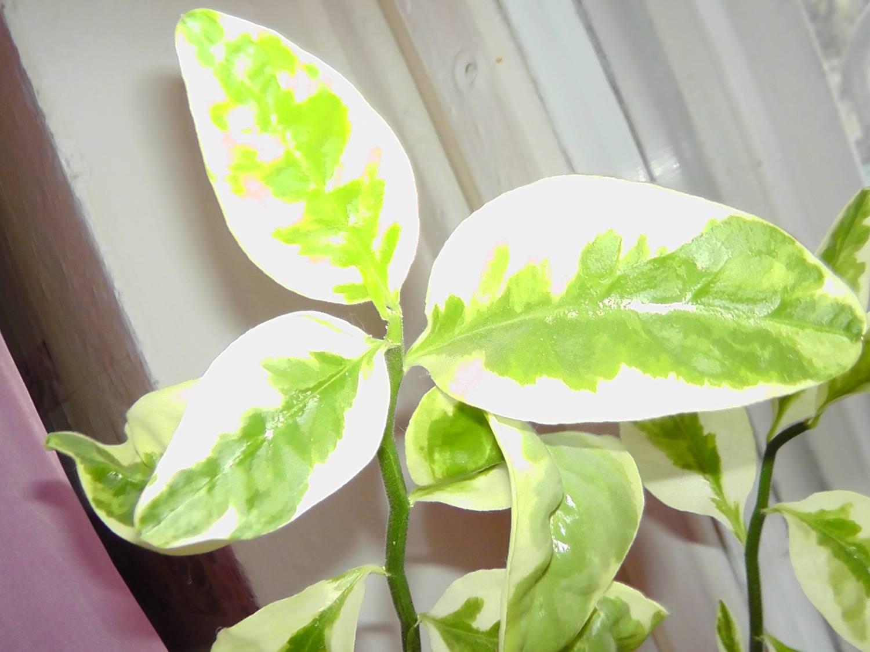 зеленые комнатные цветы названия фото